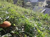 Chaloupka pod dubem - pronájem chalupy - 7 Hanušovice
