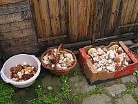 Pro houbaře 1 - Heřmanovice