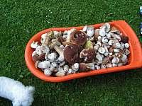 Pro houbaře - chalupa k pronájmu Heřmanovice