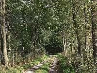 po lesních cestách se dostanete v létě na hřiby, v zimě na běžky a procházky - Domašov