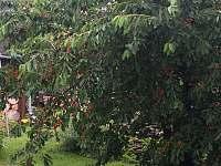 Naše třešně!