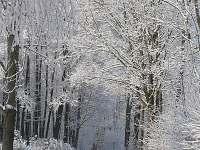 příjezdová cesta v zimě - Česká Ves