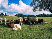 Dolní Moravice - chata k pronájmu - 34