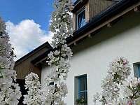 jabloň - chata k pronájmu Karlovice