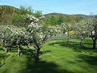 Pohled ze zahrady - Vápenná