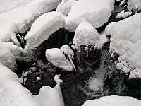 Chatička pod lesem - Bílá Opava - pronájem Suchá Rudná