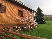 rozkvetlá zahrada - chalupa k pronajmutí Supíkovice