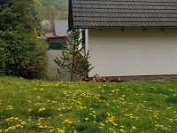 Chalupa ze zadu - ubytování Holčovice - Komora