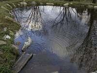 U rybníčku, Stará Červená Voda - chata k pronájmu