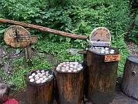 Lesní bar - Horní Lipová -