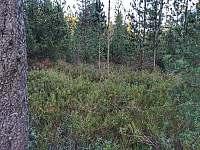Roubenka - chalupa - 33 Rejvíz