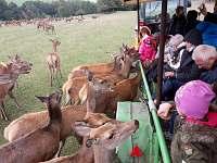 jelení farma