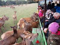 jelení farma - Rejvíz
