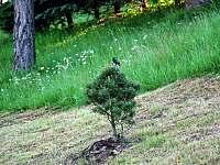 Zahrada - Bělá pod Pradědem - Domašov