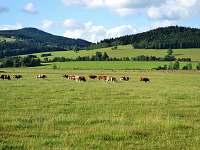 Louky v Horní Lipce - Králíky - Horní Lipka