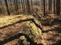 Zaniklá lesní železnice Kouty nad Desnou - Přemyslov