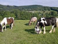 možnost vyjížďky a vození dětí na koních - chalupa k pronájmu Nové Vilémovice