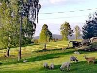 Chata U medvěda - chata - 48 Kořenov