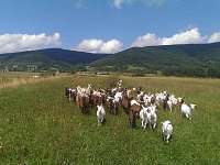 okolí farmy