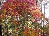 zahrada na podzim - Heřmanice