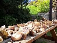 ráj pro houbaře - chalupa ubytování Desná v Jizerských horách