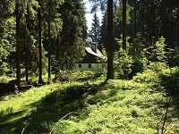 Pohled z lesa