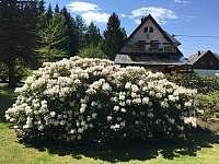 Jaro - apartmán ubytování Albrechtice v J. h. - Mariánská Hora