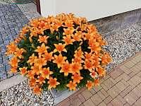 Naše lilie - Kořenov - Polubný