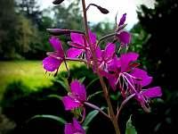 CHata dame mature květena v červenci - Světlá pod Ještědem - Dolení Paseky