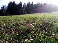 Podzimní sjezdovka plná hub. - Josefův Důl - Dolní Maxov