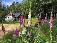léto u chalupy - Albrechtice v Jizerských horách