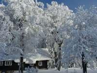 zasněžené stromy - Kořenov - Příchovice