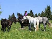 Možnost jízdy na koních - Janov nad Nisou - Hrabětice