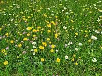 naše květinová louka - pronájem chalupy Tanvald - Český Šumburk