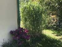 Zahrada - chalupa k pronajmutí Bílý Potok