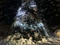 Vánoční strom na zahradě chaty - Jiřetín pod Bukovou