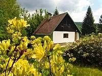 Chata u potůčku - chata k pronajmutí - 11 Bedřichov