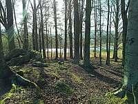 Bukový les - Záluží