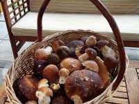 houbaření kousek od chalupy - Pluhův Žďár