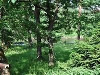 Chata přímo u Lužnice - chata - 42 Planá nad Lužnicí