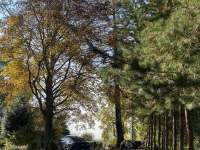 Chata pod Javorem - chata k pronájmu - 15 Hrdoňov