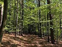 Stezka v lese - chalupa k pronájmu Těšínov u Protivína
