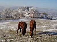 koníci v zimě - Nišovice