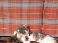 máme také kočičky.. - Nišovice