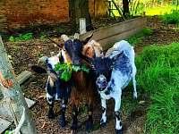 Kozy - chalupa k pronajmutí Vilice
