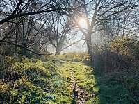 lesík asi 200m od chaty - Soběslav