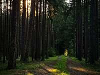Svákovský les - chata k pronajmutí Soběslav