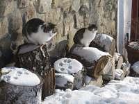 Novohradské kočky v zimě - chalupa k pronájmu Rychnov u Nových Hradů