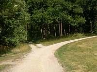 cesta do lesa - pronájem chalupy Nítovice