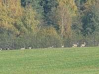 Lhota u Borovan - chata k pronájmu - 11
